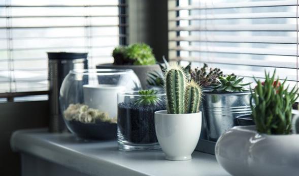 La importancia de las plantas en la decoración